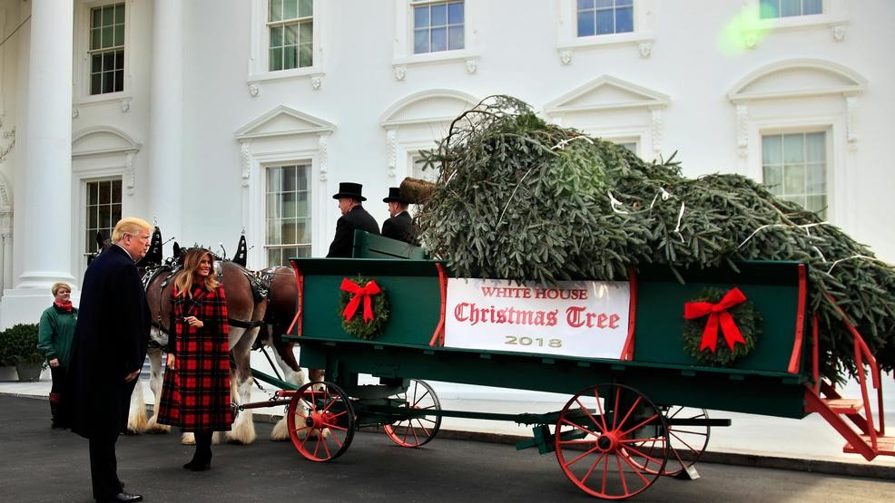 Trump First Lady Accept Official White House Christmas Tree